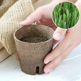 (観葉植物)長さで選べる ペットグラス 直径8cmECOポット植え(発芽前)(無農薬)(1ポット) 猫草 北海道冬季発送不可