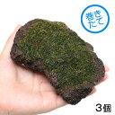 (水草)巻きたて ウィローモス 富士ノ溶岩石 Mサイズ(約14cm)(無農薬)(3個) 北海道航空便要保温