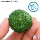 (水草)巻きたて パールグラスボール(無農薬)(3個)