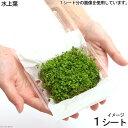 (水草)ニューラージパールグラス(水上葉)(無農薬)(1シート分) 北海道航空便要保温