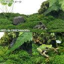 (水草)ビバリウム用キューバパールグラス陸生コケミックス(水上葉)キューブタイプ(約4cm)(無農薬)(1個)
