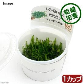 (水草)組織培養1−2−GROW! ウィーピングモス(液体培地) トロピカ製(無農薬)(1カップ) 北海道航空便要保温