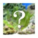 (海水魚 海藻)生餌 おまかせ海藻 1パック 北海道・九州・沖縄航空便要保温