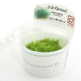 (水草)組織培養1−2−GROW! ウォーターローン トロピカ製(無農薬)(1カップ)
