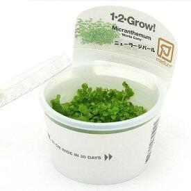 (水草)組織培養1−2−GROW! ニューラージパールグラス トロピカ製(無農薬)(1カップ)