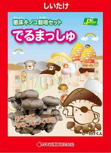 (観葉植物)きのこ栽培キット でるまっしゅ しいたけ(1個) 家庭菜園 北海道冬季発送不可