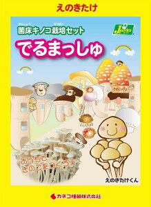 (観葉植物)きのこ栽培キット でるまっしゅ えのきたけ(1個) 家庭菜園 北海道冬季発送不可