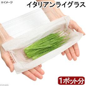 (観葉植物)採れたて イタリアンライグラス 国産(無農薬)(1ポット分) うさぎ 猫 犬のおやつ 北海道冬季発送不可