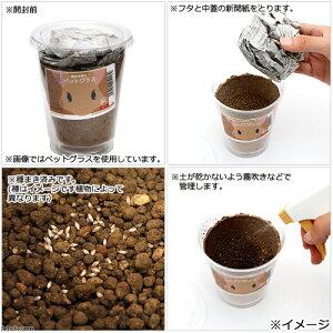 (観葉)種まき済みペットリーフ栽培ECOポットお試しセット(3ポットセット)