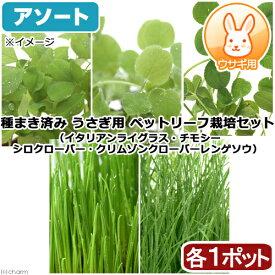 (観葉植物)アソート 種まき済み うさぎ 小動物用 ペットリーフ栽培 ECOポット(5ポット)