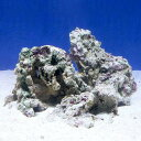 (海水魚)Bグレードライブロック S−Mサイズミックス(2kg)(形状お任せ)