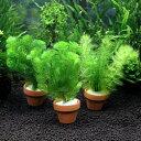 (水草 熱帯魚)メダカ・金魚藻 ミニ寄植え鉢(無農薬)(3鉢)