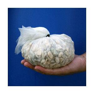 C.P.Farm直送(海水魚ろ材)バクテリア着き熟成ろ材LLサイズ1リットル(0.24個口相当)別途送料
