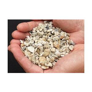 C.P.Farm直送クラッシュコーラル・シェルピース軽洗浄済み5kg(約4L)サンゴ砂・貝殻ミックス(0.32個口相当)別途送料