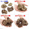 "(Sea fish) C. P... Farm-cultured live rock ""BaseRock"" 30 cm cube tank set (shape up) Hokkaido and Kyushu flight requiring insulation."