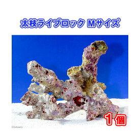 (海水魚)ライブロック 太枝状 Mサイズ(1個)(形状お任せ) 北海道・九州・沖縄航空便要保温