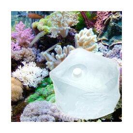 (海水魚)足し水くん テナーボトル 天然海水(海洋深層水) 40リットル 2個口送料無料 航空便不可・沖縄不可