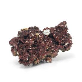 (海水魚)Real Reef Rock(リアルリーフロック) バクテリア付き Sサイズ(1個)(形状お任せ)