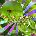 (エビ・浮き草)ビオトープ用 うきうきセット ミナミヌマエビ Sサイズ(10匹)+おまかせ浮き草1種(3株)