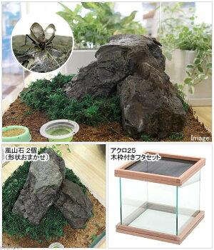 アクロ25鈴虫風山石飼育セット(水槽・木枠・石3点セット)●【関東当日便】