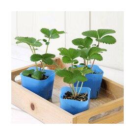 (観葉植物)デルモンテ 野菜苗 イチゴ めちゃウマッ!いちご(四季成り) 3号(1ポット) 家庭菜園