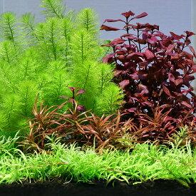 (水草)おまかせ水上葉 レイアウトセット 20cm水槽用 4種(無農薬)(1パック)(水草説明書付)