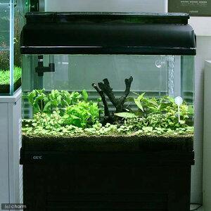 (水草)流木付 おまかせ水上葉 有茎草レイアウトセット 60cm水槽用 8種(無農薬) 水草説明書付 本州四国限定