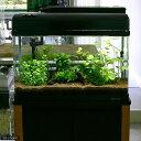 (水草)おまかせ 2灯用レイアウトセット 流木付 60cm水槽用 6種(無農薬) 水草説明書付 熱帯魚 北海道航空便…