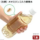 (生餌)オオミジンコ入り飼育水(500ml) 北海道・九州航空便要保温