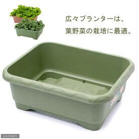 リッチェル 緑のやさいプランター 50型(グリーン) 園芸 ガーデニング ベランダ菜園 お一人様1点限り 関東当日便
