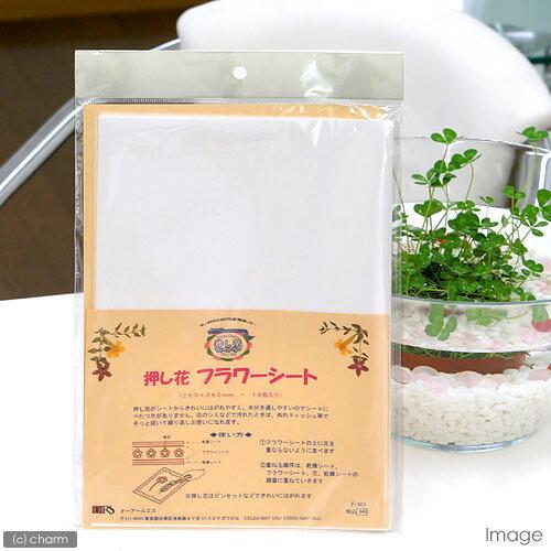押し花フラワーシート(260×360mm10枚) 関東当日便