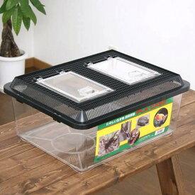 飼育容器 特大フラット 黒(430×340×190mm) プラケース 虫かご 昆虫 お一人様4点限り 関東当日便