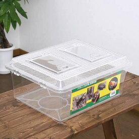 飼育容器 特大フラット クリア(430×340×190mm) プラケース 虫かご 昆虫 お一人様4点限り 関東当日便
