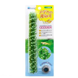 水作 メダカの産卵も(人工産卵藻) 関東当日便