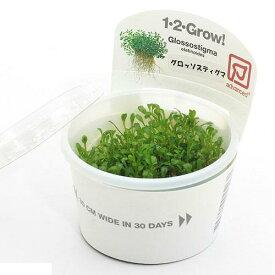 (水草)組織培養1−2−GROW! グロッソスティグマ トロピカ製(無農薬)(1カップ)