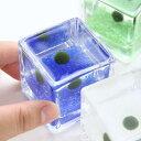 (水草)私の小さなアクアリウム 〜ウキウキ気分なマリモセット(ブロックグラスS×4ポット)〜(説明書付) 本州・四国限定