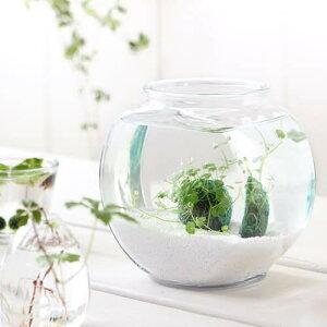 (水草)私の小さなアクアリウム 〜窓辺のノチドメボール〜 アメリカ製ドラム金魚鉢 小 本州四国限定 お一人様3点限り