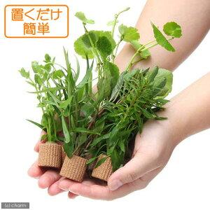 ■ライフマルチおまかせ有茎草5種(計5個)