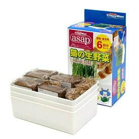 キャティーマン asap 猫の生野菜 6回分 猫草 ドギーマン 関東当日便