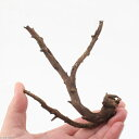形状お任せ 煮込み済み 極上流木 Sサイズ(約10〜20cm)1本 関東当日便