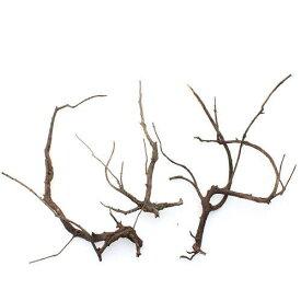 形状お任せ 煮込み済み 極上流木 Lサイズ(30〜45cm) 3本 関東当日便