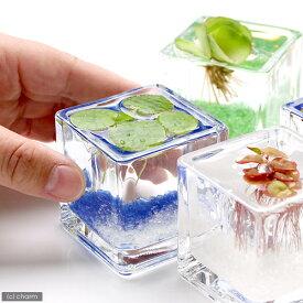 (浮草)私の小さなアクアリウム 〜ウキウキ気分な浮き草セット(ブロックグラスS・4ポット)〜 本州四国限定
