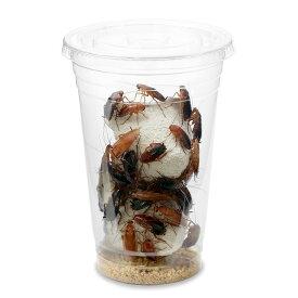 (生餌)レッドローチ Lサイズ 3カップ分 爬虫類 大型魚 餌 エサ 沖縄・離島不可 タイム便・航空便不可