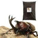 (昆虫)国産カブトムシ 幼虫(12匹) + XLマット カブト用 10リットル (説明書付) 本州・四国限定