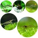 (エビ・貝)コケ対策セット 水草水槽用 フルコンビネーション