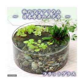 (めだか)私のアクアリウム 〜日本水景のメダカ〜フラットグラス 説明書付 飼育セット 本州四国限定