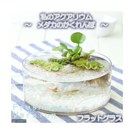(めだか)(水草)私のアクアリウム〜メダカのかくれんぼ フレッシュネスバージョン〜 フラットグラス 飼育セット 本州四国限定