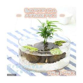 (めだか)(水草)私のアクアリウム 〜メダカのオアシス フレッシュネスバージョン〜おまかせメダカ フラットグラス 説明書付 飼育セット 本州四国限定