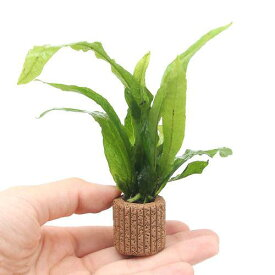 (水草)ライフマルチ(茶) ミクロソリウム プテロプス(1個)