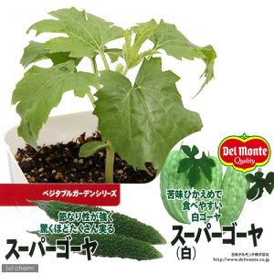 (観葉植物)デルモンテ 野菜苗 スーパーゴーヤ(白) 苦味ひかえめ 3号(1ポット) 緑のカーテン 家庭菜園